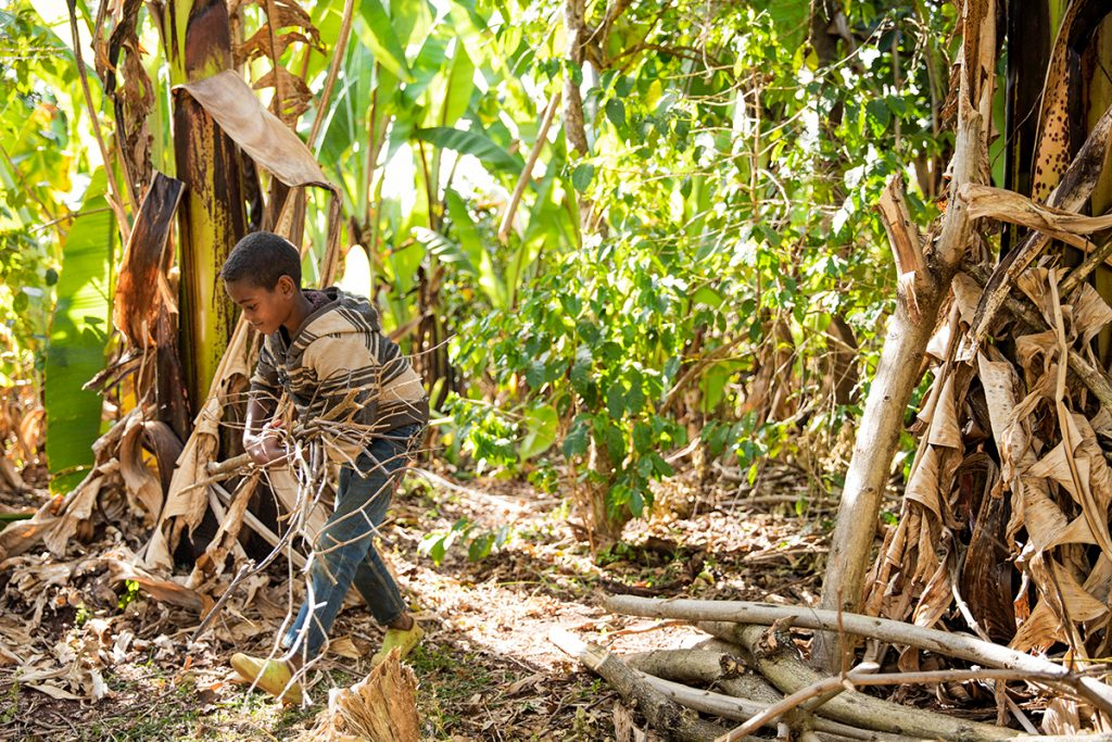 As part of his daily chores, Anteneh collects firewood.